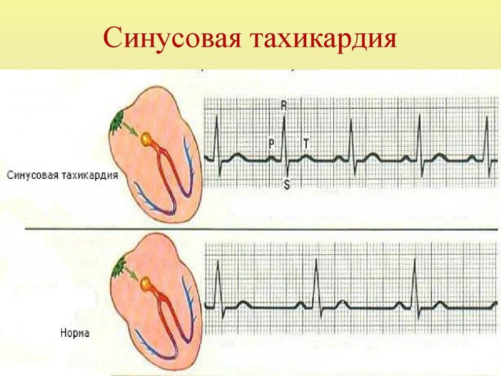 Fiziolog-sinu-tah2