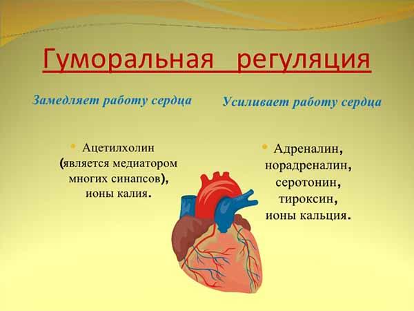 gormonalnaya1