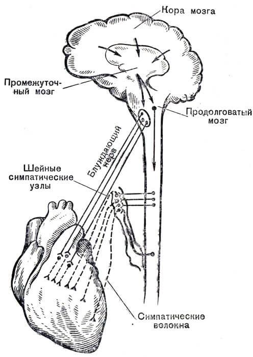 Nevrolog_aritm1